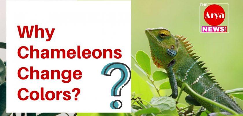 Why Chameleons Change Colors?